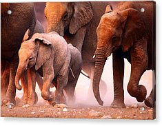 Elephants Stampede Acrylic Print by Johan Swanepoel