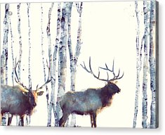 Elk // Follow Acrylic Print by Amy Hamilton