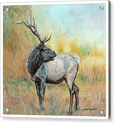 Elk In Winter Painting Acrylic Print by Janet Pancho Gupta