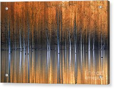 Emerging Beauties Reflected Acrylic Print by Marco Crupi