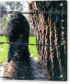 Emu Next To Tree Acrylic Print by Marcia Cary