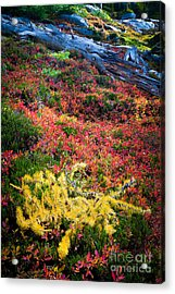 Enchanted Colors Acrylic Print by Inge Johnsson