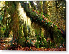 Enchanted Forest Acrylic Print by Inge Johnsson