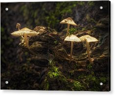 Enchanted Forest Acrylic Print by Scott Norris