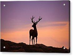 Enjoying The View Acrylic Print by Darren  White
