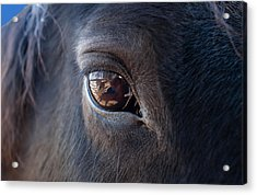 Equine In Sight Acrylic Print by Sheryl Cox