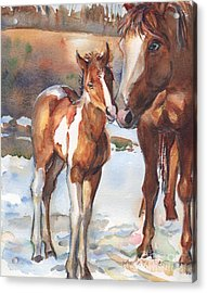 horse painting in watercolor Eskimo Kisses Acrylic Print by Maria's Watercolor