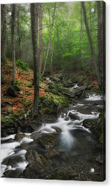 Ethereal Forest Acrylic Print by Bill Wakeley