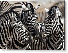 Etosha National Park Acrylic Print by Janet Muir
