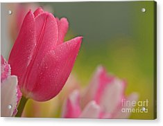 Even Guys Like Pink Acrylic Print by Nick  Boren