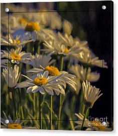 Evening Light Acrylic Print by Jean OKeeffe Macro Abundance Art