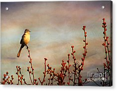 Evening Mocking Bird Acrylic Print by Darren Fisher