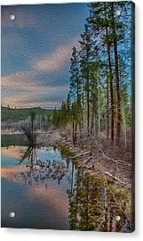 Evening On The Banks Of A Beaver Pond Acrylic Print by Omaste Witkowski