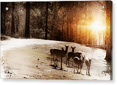 Evening Social  Acrylic Print by Kim Henderson
