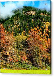 Evergreen Color Acrylic Print by Benjamin Yeager