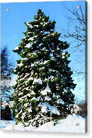 Evergreen In Winter Acrylic Print by Susan Savad