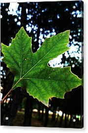 Every Story Has A Beginning... Acrylic Print by Lucy D