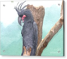 Exotic Bird Acrylic Print by Anthony Morretta
