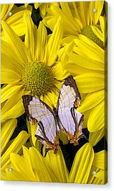 Exotic Butterfly Acrylic Print by Garry Gay