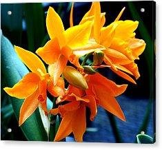 Exotic Orange Acrylic Print by Karen Wiles
