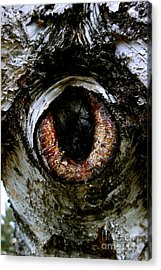 Eye In The Tree 1 Acrylic Print by Jacqueline Athmann