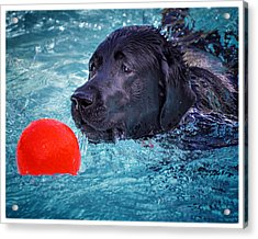 Eye On The Ball Acrylic Print by Diane Wood