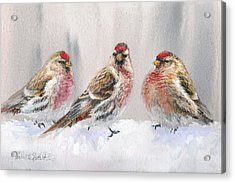 Snowy Birds - Eyeing The Feeder 2 Alaskan Redpolls In Winter Scene Acrylic Print by Karen Whitworth