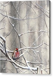 Eyeing The Feeder Alaskan Redpoll In Winter Acrylic Print by Karen Whitworth