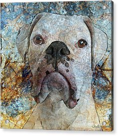 Eyes Front Acrylic Print by Judy Wood