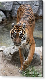 Eyes On You Acrylic Print by Dan Holm