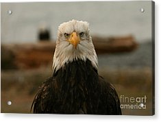 Face Off Acrylic Print by Crystal Magee