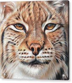 faces of the Wild - Lynx Acrylic Print by Elena Kolotusha