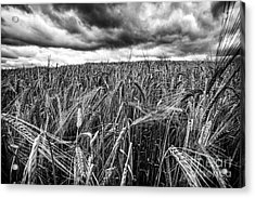 Facing The Storm Acrylic Print by John Farnan