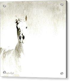 Fade To White Acrylic Print by Karen Slagle