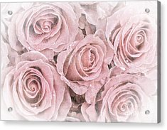 Faded Roses Acrylic Print by Jane Rix