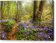 Fairies Forest Acrylic Print by Debra and Dave Vanderlaan