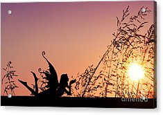Fairy At The Bottom Of The Garden Acrylic Print by Tim Gainey