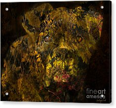 Fall Boxer Acrylic Print by Judy Wood