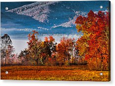 Fall Color Feast Acrylic Print by Dave Bosse