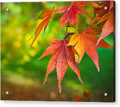 Fall Color Acrylic Print by Jeff Klingler