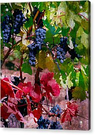 Fall Delight I Acrylic Print by Ken Evans