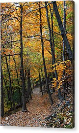 Fall Foliage Colors 03 Acrylic Print by Metro DC Photography