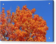 Fall Foliage Colors 19 Acrylic Print by Metro DC Photography