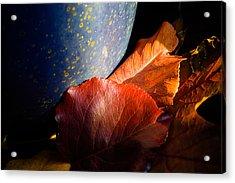 Fall Foliage Still Life Acrylic Print by Jeff Folger