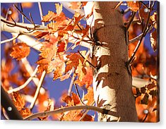 Fall Forever Acrylic Print by Gloria Pasko