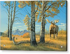 Fall Landscape - Moose Acrylic Print by Paul Krapf