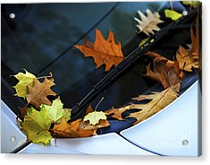 Fall Leaves On A Car Acrylic Print by Elena Elisseeva