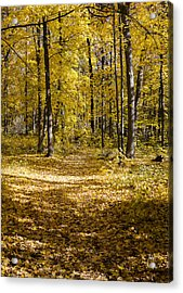 Fall Trail - Arboretum - Madison - Wisconsin Acrylic Print by Steven Ralser