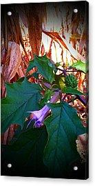 Fall Wild Flower Purple Bloom Acrylic Print by Brittany Perez