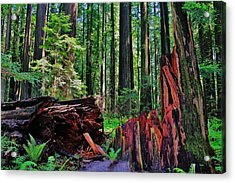 Fallen Giant Acrylic Print by Benjamin Yeager